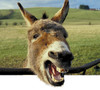 Donkey2b
